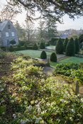 A slope of hellebores is illuminated above the formal garden featuring clipped yew, bay and Portugese laurels. Old Rectory, N...