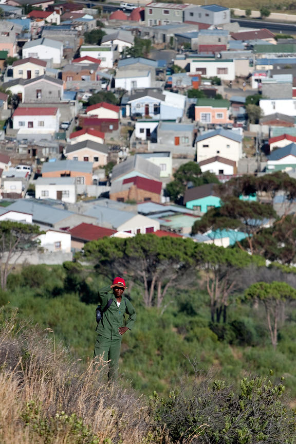 A baboon monitor from the NGO Baboon Matters stands watch above the town of Ocean View, Cape Peninsula, South Africa