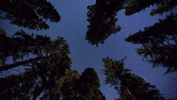 Medium Shot: Vertical Shot Of Moon Rays & A Brilliant Milky Way Over Giant Sequoia Tree Tops (Night to Day)