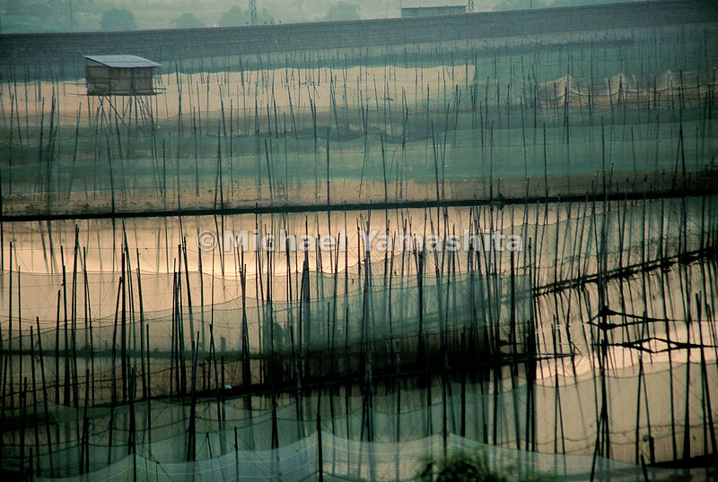 Looking like matchsticks linked by fishing nets, its likely that Zheng He passed hundreds of scenes like this while embarking...