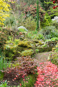 The garden around the house is a rich mix of shrubs, trees and perennials including many ferns, tall camellias and small pond...