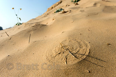 Circular pattern in a desert sand dune created by a stalk of grass blowing in the wind, Chawandiya village, Rajasthan, India