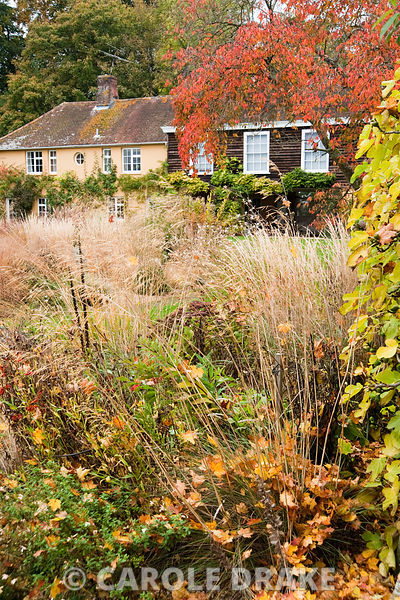 Grasses and herbaceous perennials including Stipa gigantea and Digitalis ferruginea in the walled garden. Broughton Buildings...