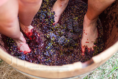 Fireside Winery iStomp Winery 2012
