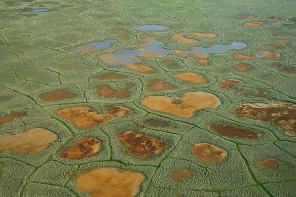 Aerial view of tundra polygons, National Petroleum Reserve, Alaska, USA July 2007