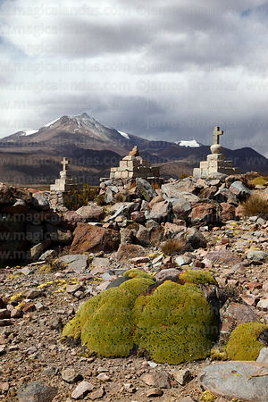 Stone cairns with crosses on hilltop and yareta plant (Azorella compacta), Guallatiri volcano in background, Las Vicuñas Nati...