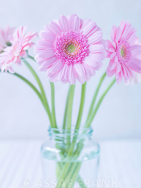 Gerberas in glass bottle