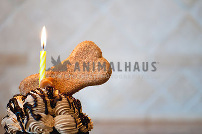Dog Birthday Cupcake with Lighted Yellow Candle