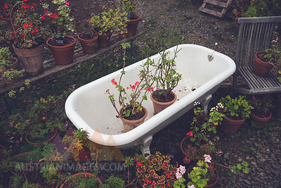 Blooming potted plants in an old tub in a garden