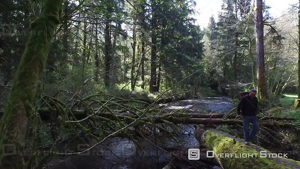 Backpacker Walking in Forest Oregon USA Aerial Footage
