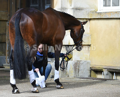 1st Trot Up Badminton Horse Trials photos