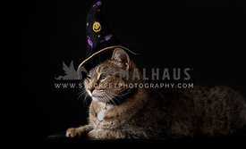 Halloween cat isolated on black