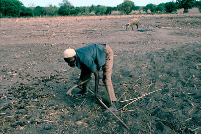 Anafo cultivating his land