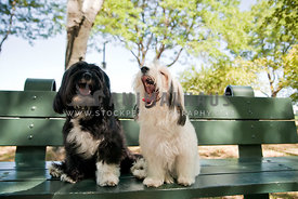 happy dogs sitting on a bench