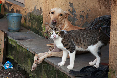 A stray cat and dog in the fishing village of Worli, Mumbai, India.