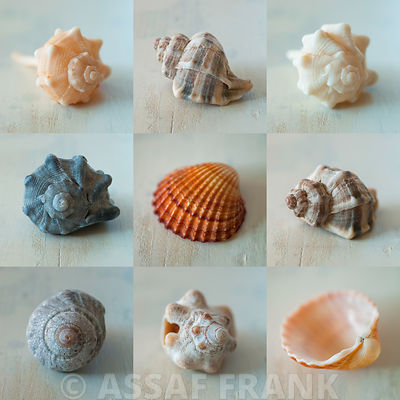 Collage of sea shells
