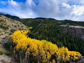 River of Aspens | Sangre de Cristo Mountains, CO