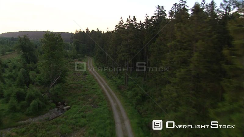 Flying above a narrow road and over pine forest in Belgian High Fens
