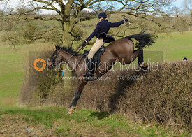 Jumping a big hedge at Ladywood - The Cottesmore Hunt at Ladywood