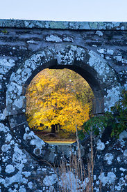 Golden foliage of tree viewed through hole in wall