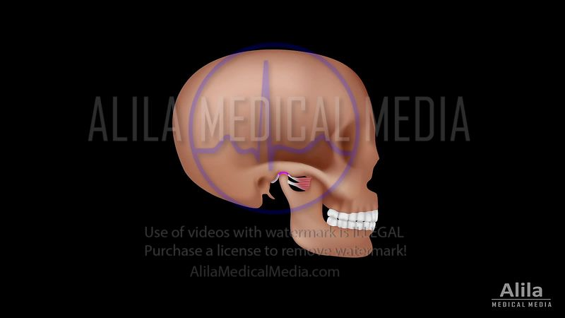 Temporomandibular joint (TMJ) video normal function