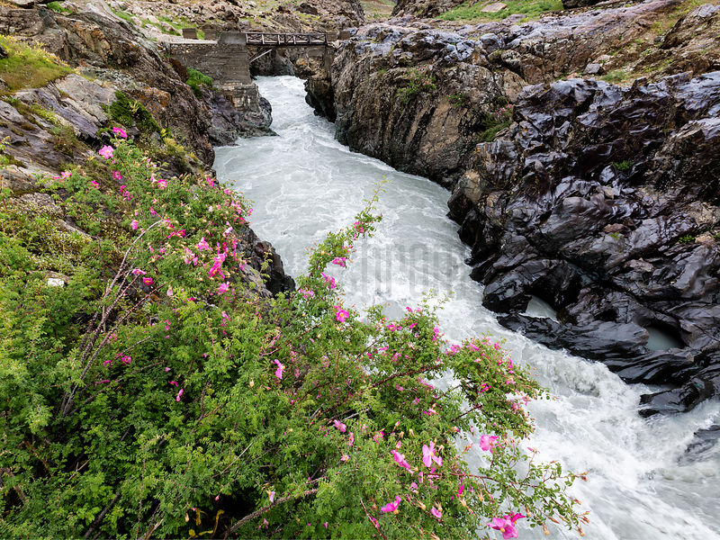 Wild Rose and River Gorge