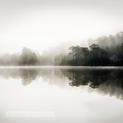Misty dawn in Glen Affric - BP2987B