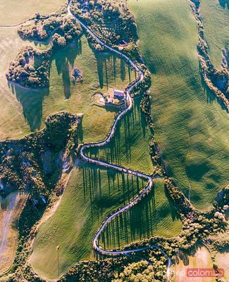 Aerial view of cypress tree lined winding road in Tuscany, Italy