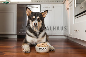 Husky Mix Dog with Bowl of Peanuts