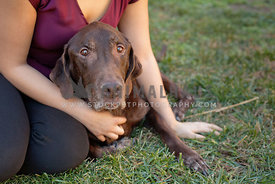 Old-Senior-Dog-Chocolate-Lab-Sitting-Snuggled-with-Young-Woman-Owner