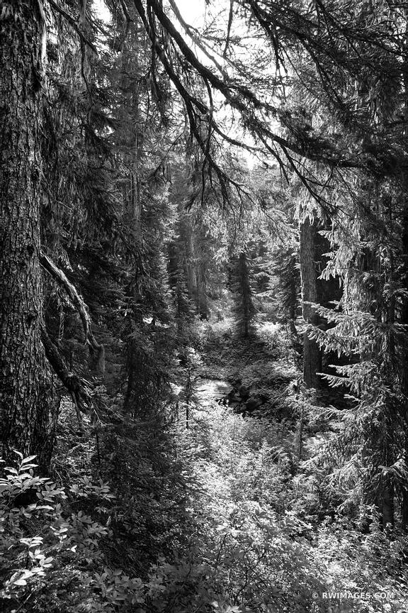 FOREST MOUNT RAINIER NATIONAL PARK WASHINGTON STATE BLACK AND WHITE VERTICAL