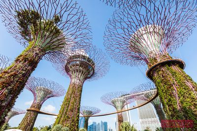 Supertree grove at daytime, Gardens by the Bay, Singapore