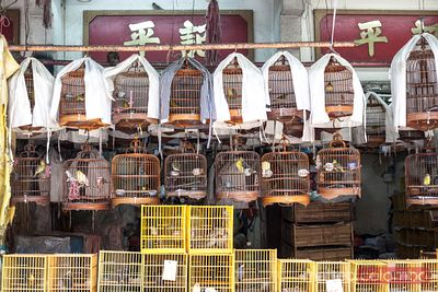 At Hong Kong's bird market