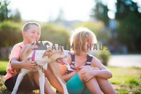 Pitbull mix playing with children