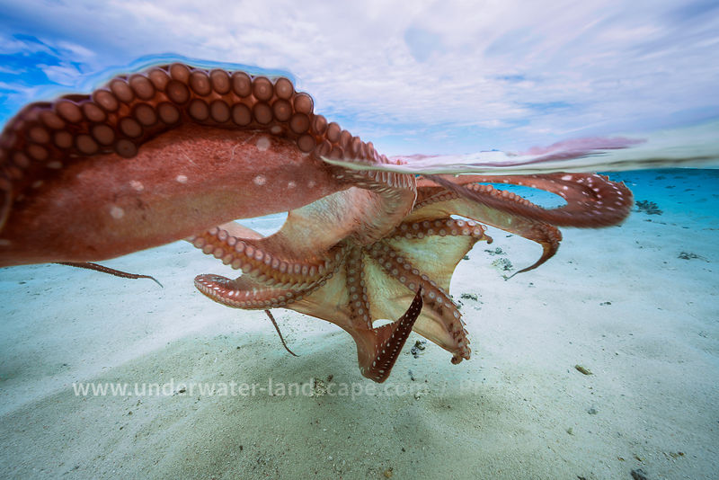 Octopus tentacles in Mayotte island