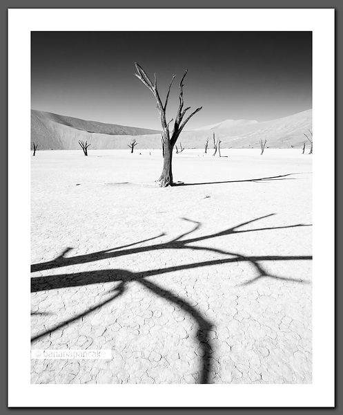 Shadows and dead trees (BP2717BBW)