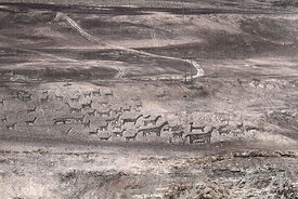 View of geoglyphs of llamas / camelids at Tiliviche , Region I , Chile