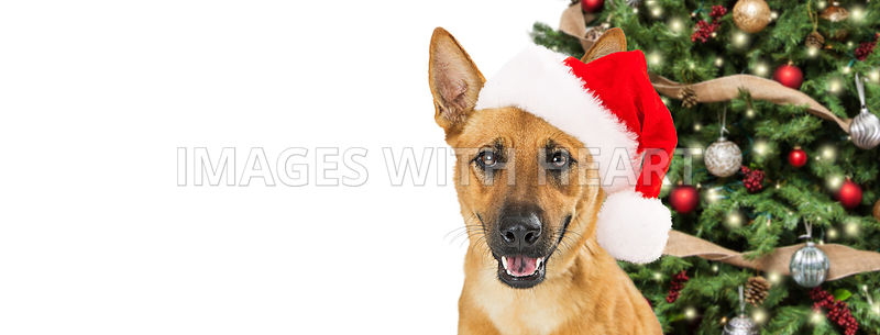 Happy Christmas Dog Web Banner