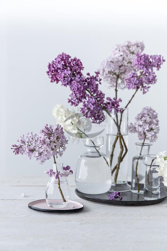 Lilac by Gabler