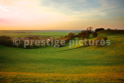 Sheep Grazing on a Rolling Hillside at Dusk