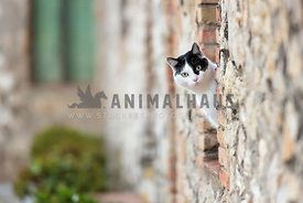 black and white cat peeking out from window