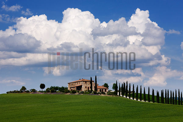 Tuscan Farmhouse with Cypress-Lined Driveway