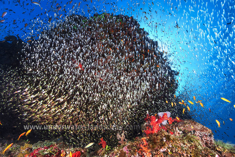 The life of the reef: the alvins shoal