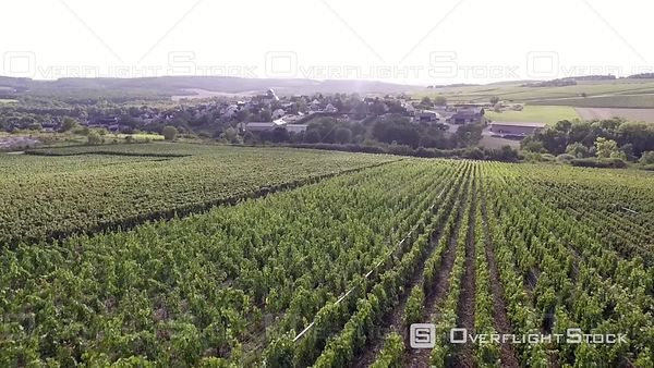 Vineyard of Champagne Region France