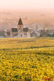 Church and vineyards, Mesnil sur Oger, Champagne, France