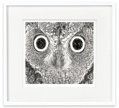 African Scops Owl | Africa on White