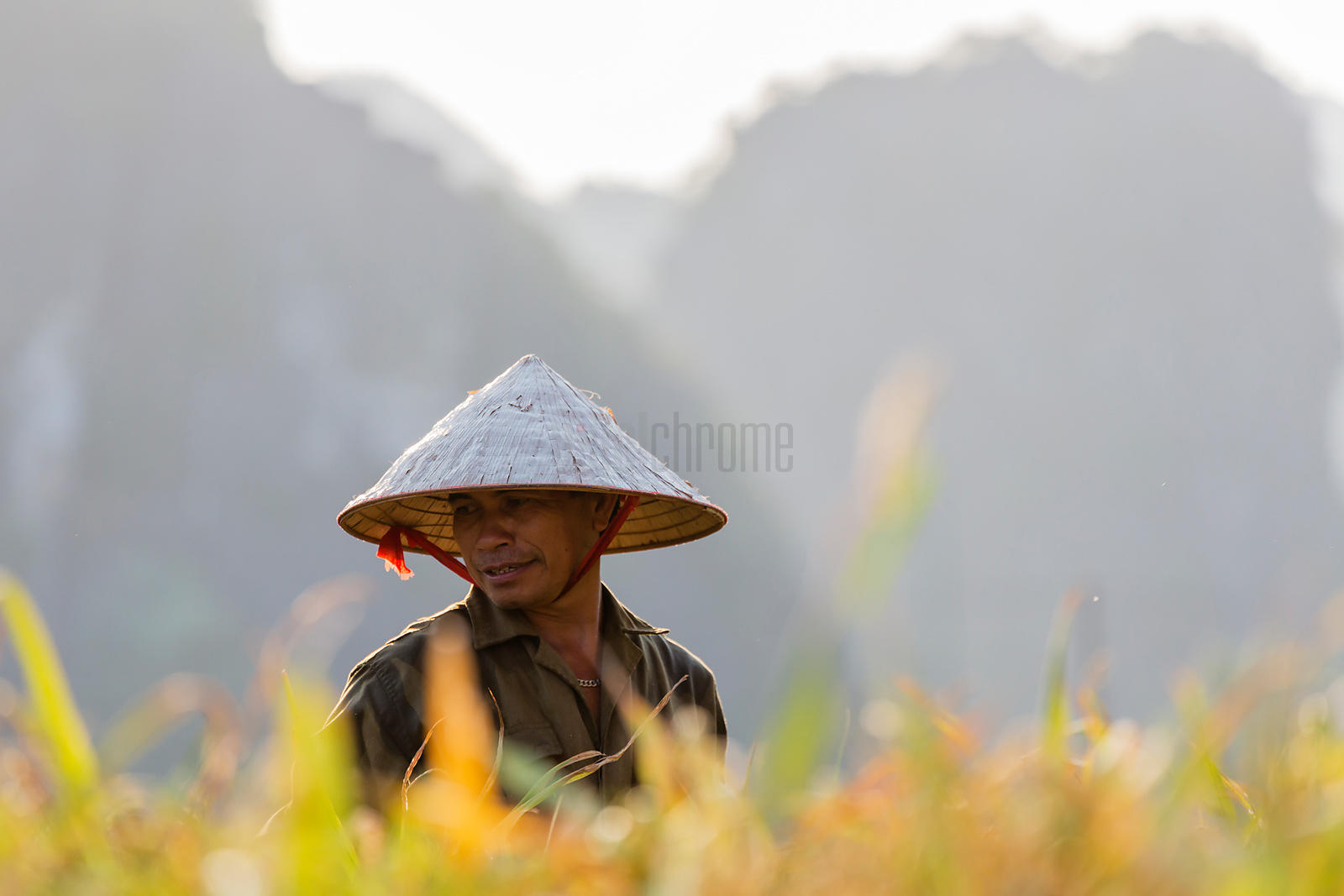 Portrait of a Rice Worker