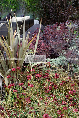 Massif pourpre : Cosmos atrosanguineus 'Chocamocha' (cosmos chocolat), Phormium tenax (Lin de Nouvelle-Zélande), Carex comans 'Bronze Perfection', Sambucus nigra 'Black Lace', Paysagiste : Clive Scott. TFS, Angleterre