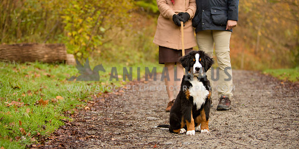 puppy with owners on walk in fall