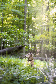 dog in sunbeams among ferns